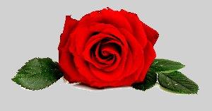 Rosa_Umm_Ayman